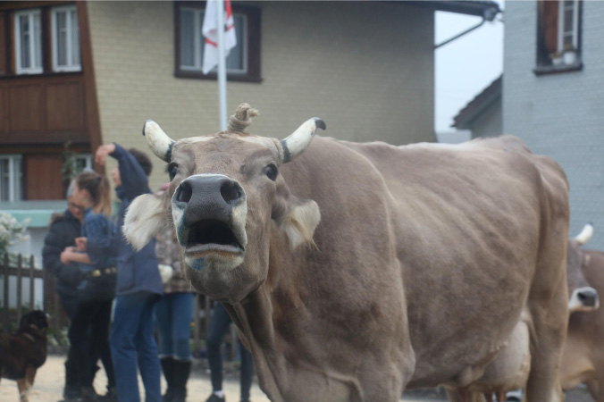 Traditional Cow Ceremony, Appenzell